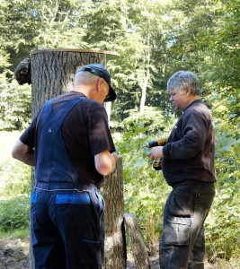 Kikketræ monteres1